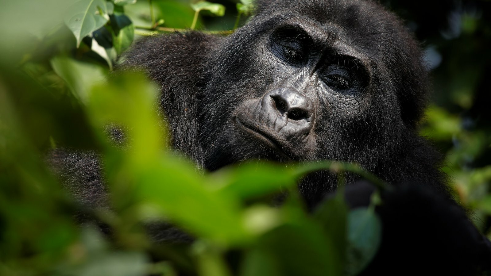 Eco-warriors in African style: Virunga National Park
