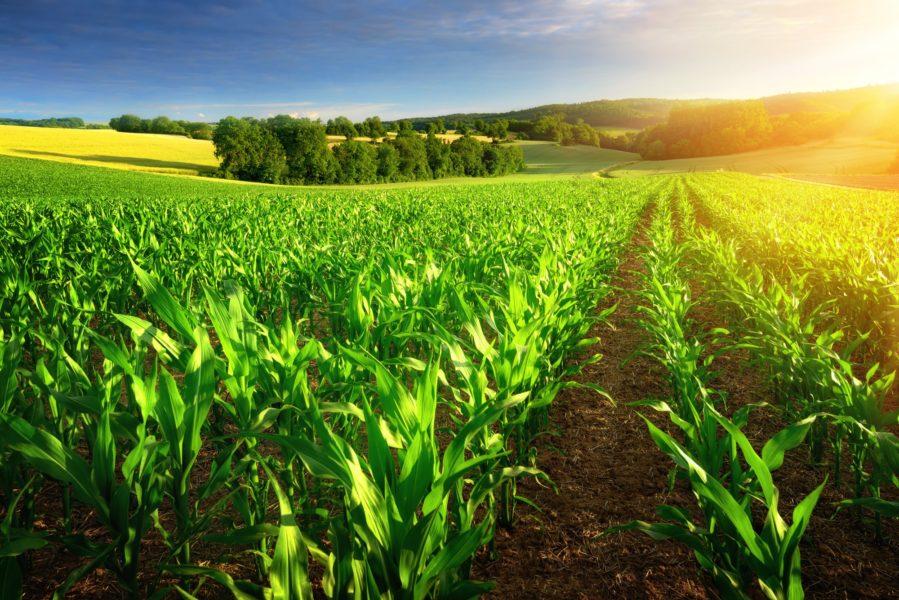 التحول غير المرئي للأرض إلى صحراء  هل يمكننا تجنبه؟