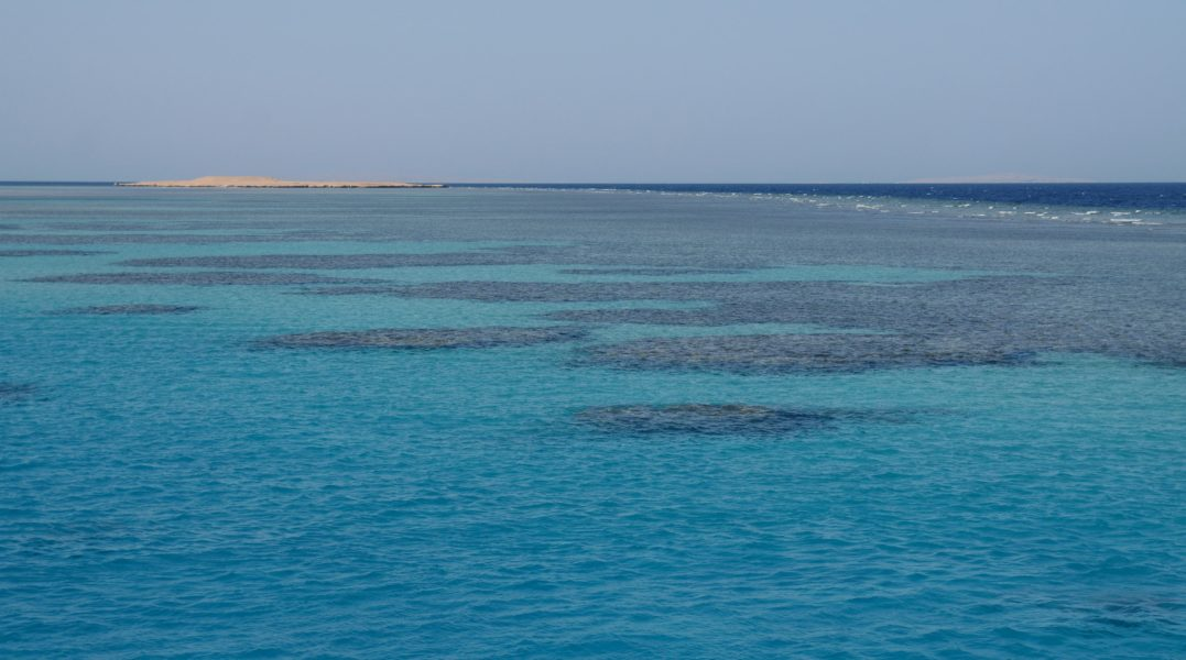 Middle East coral reefs: How sunscreen and mass tourism are taking a toll on marine life