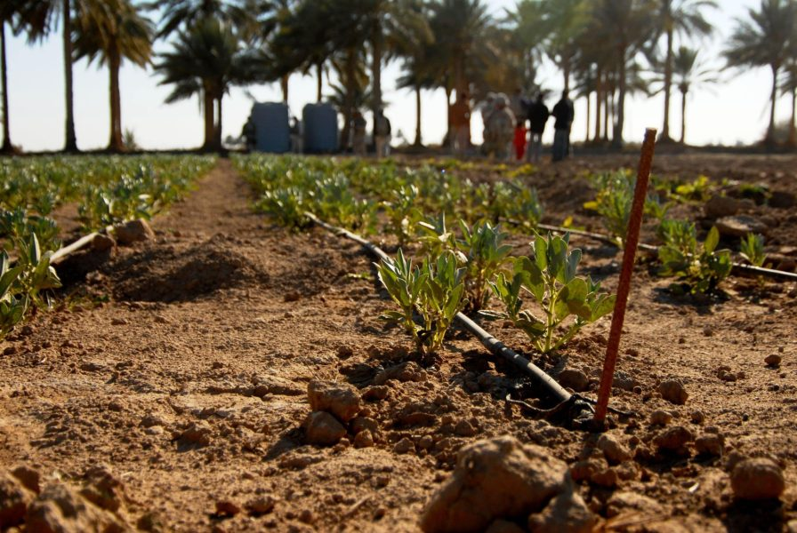 Iraq struggles with environmental challenges (in pictures)