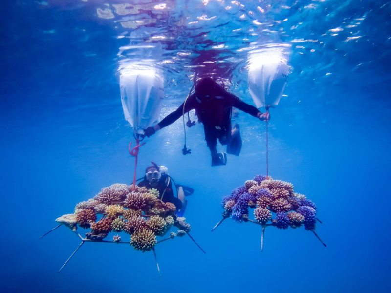 AD Ports Group, NYU Abu Dhabi advance coral relocation research efforts