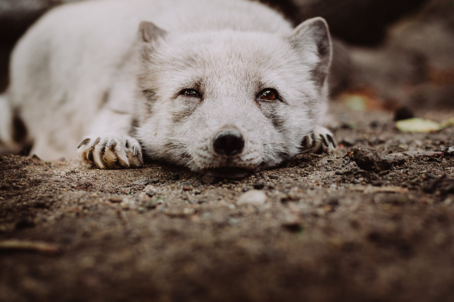 Why do we have to give up fur and leather clothes, and what are the alternatives
