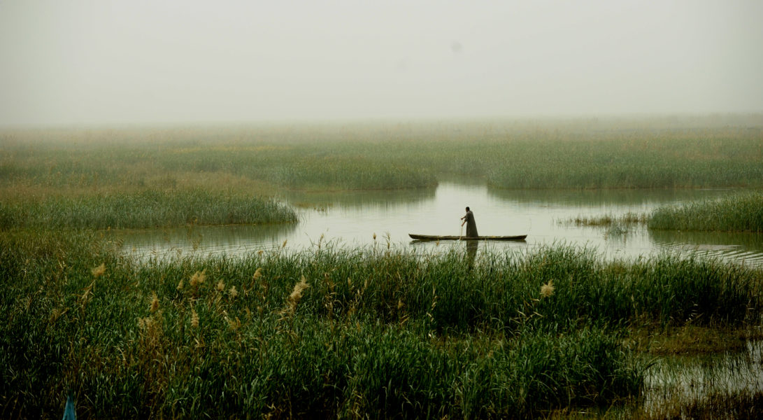 The cradle of Iraq's ecosystem: Mesopotamian Marshes in desperate need of environmental protection