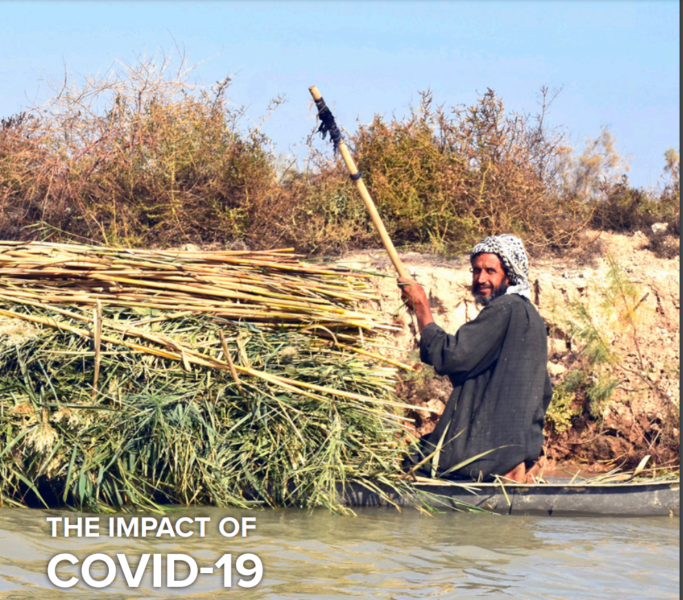 COVID-19 and environmental sustainability in Iraq: UNDP report